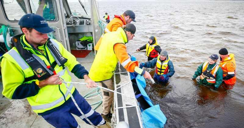 Petuna Whale Rescue Efforts