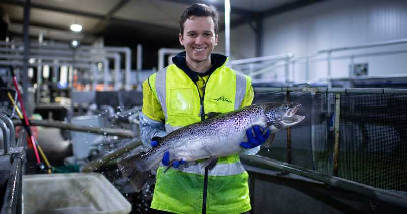 Breeding fish to better withstand climate change