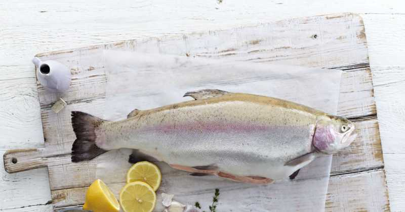 Petuna Ocean Trout Continues To Shine, Winning Gold.